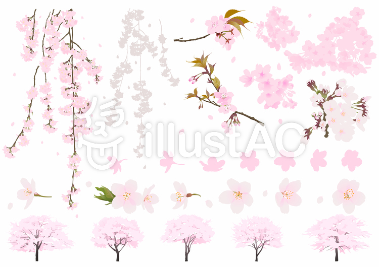 リアル桜イラストセット