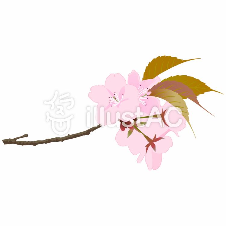 リアル桜イラスト